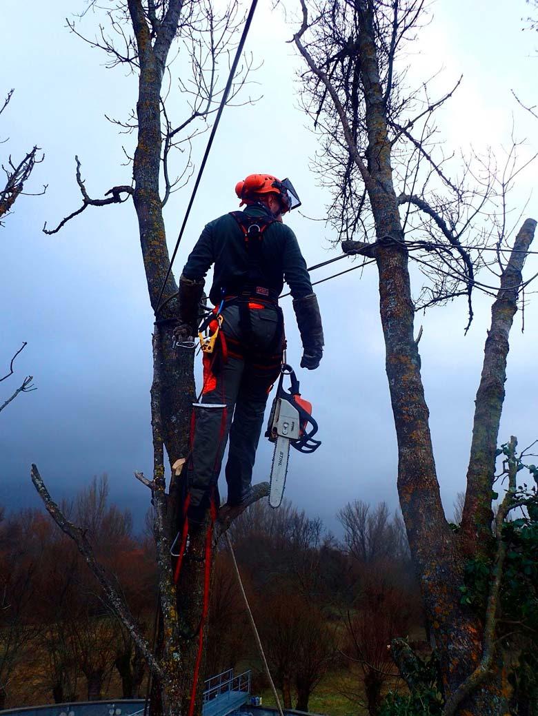 ARBOCAN - Arboricultura, talas y podas en Cantabria